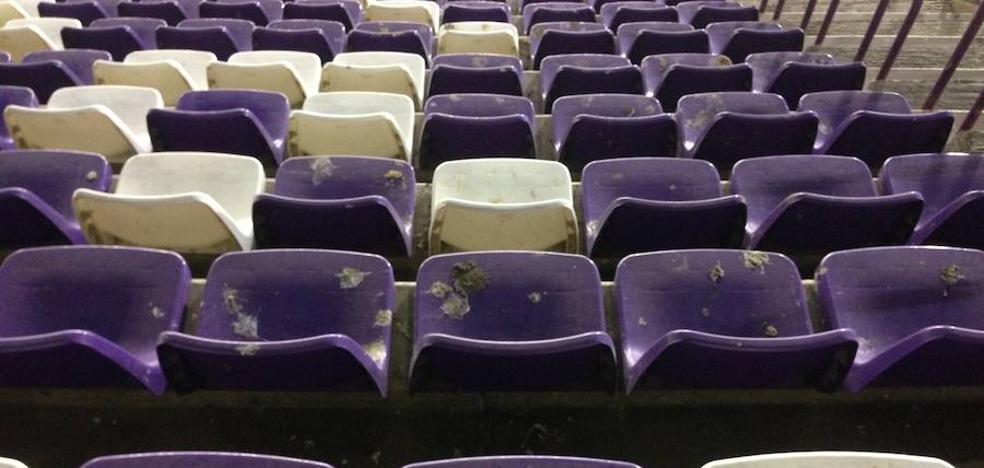 Halcones para evitar la suciedad en las gradas del estadio Zorrilla