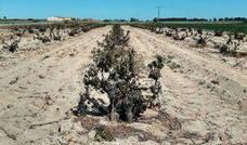 La sequía y las heladas arruinan el 80% del cereal en el norte de Segovia