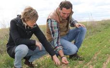 Agricultura da por perdida la cosecha en Valladolid y Palencia
