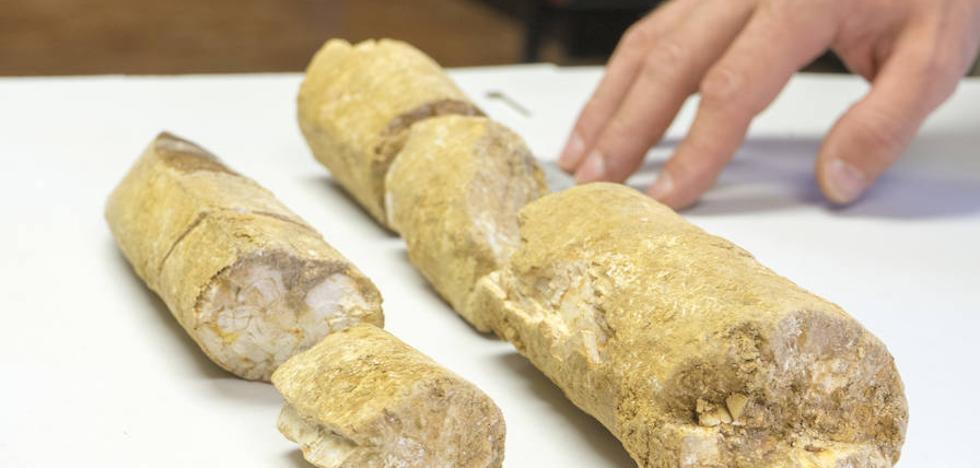 Investigadores de IE hallan restos de un joven elefante prehistórico
