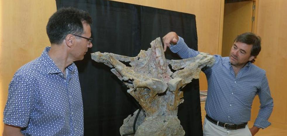 Documentan en la Sierra de La Demanda una nueva especie de dinosaurio gigante