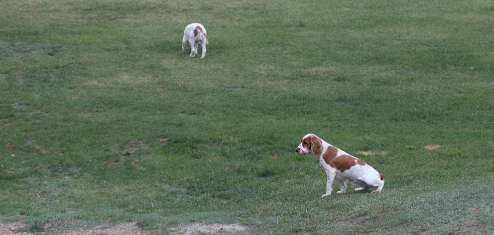 Los perros no peligrosos pueden soltarse en el parque Ribera Sur