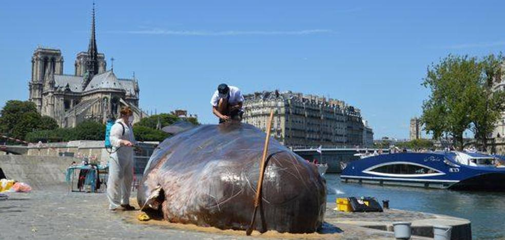 Una ballena varada para concienciar sobre el cambio climático