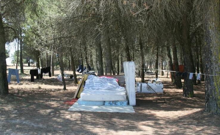 Asentamiento ilegal de rumanos en un pinar próximo a Cuéllar