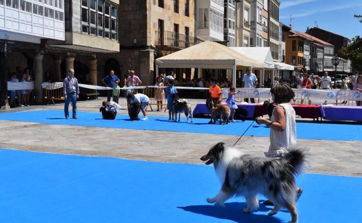 II Concurso Canino Villa de Aguilar