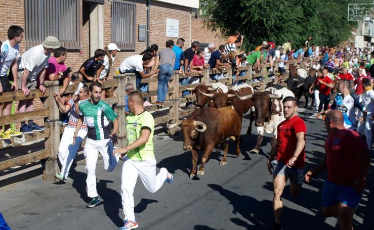Segundo día, encierro urbano con toros Hnos. Hernández Camacho