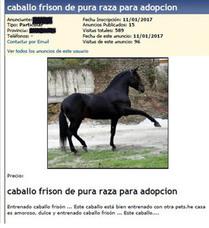 Detenido en Barcelona por estafar a un vallisoletano con la adopción de un caballo frisón