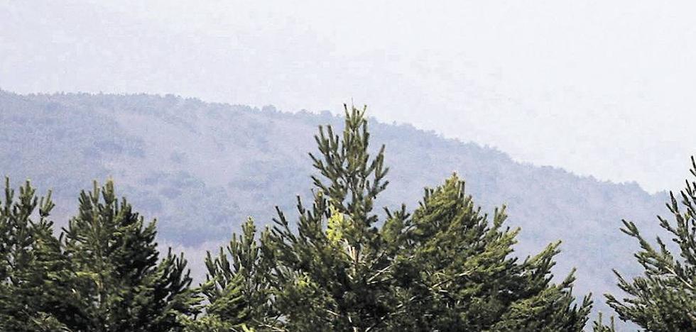 El encuentro con la naturaleza en los Bosques de Aventura