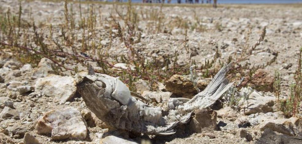 Regantes del Alto Duero rechazan la cesión de agua a los del Bajo Duero