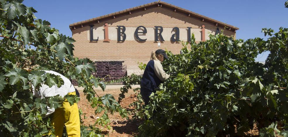 Las labores de aclareo preparan los viñedos para la vendimia en Liberalia
