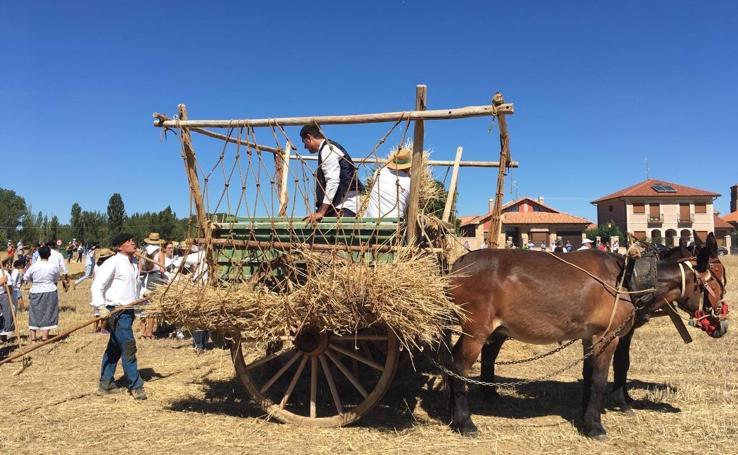 Fiesta de la Trilla en Castrillo de Villavega (Palencia)