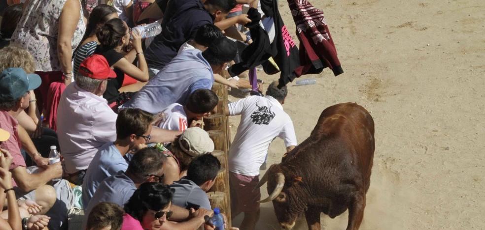 Herido un vecino de 58 años en la capea de Peñafiel