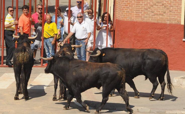 Último encierro de las fiestas de Rueda (Valladolid)