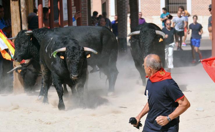 Encierro del sábado en Serrada