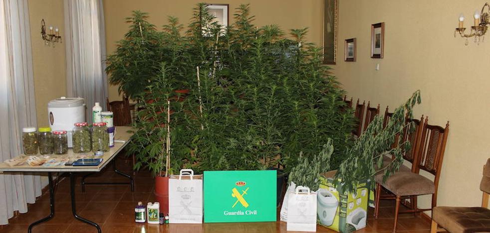 Detenidos tras alquilar una parcela como huerto ecológico y dedicarla a cultivar marihuana