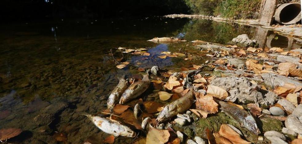 La sequía mata a cientos de peces en el Pisuerga