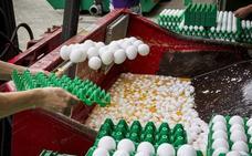 Fipronil no es la única sustancia tóxica en los huevos contaminados