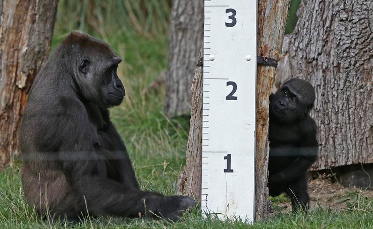 El Zoo de Londres pesa y mide a sus animales en su revisión anual