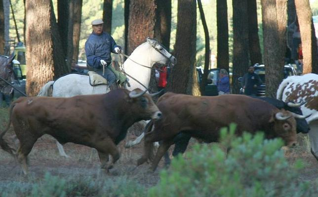 Encierros de Cuéllar designa mejor ganadería a Yerbabuena