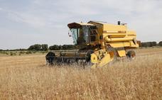 La Junta destina 1,2 millones de euros a difundir la agricultura ecológica