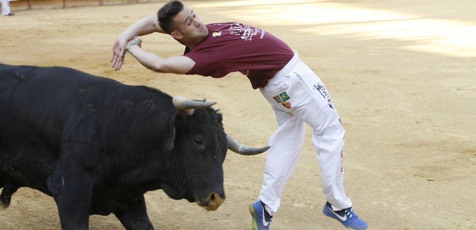 Sacrificado un toro en Laguna tras ser embestido por otro