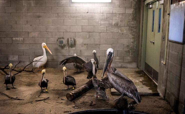 Encierran a los animales del zoo de Miami por el huracán Irma