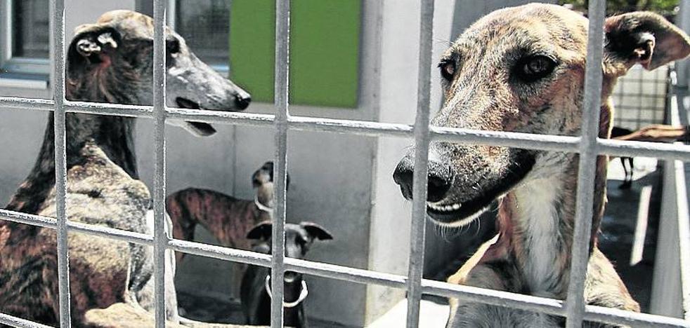 El parque del Salón acogerá una novedosa feria de adopción de animales
