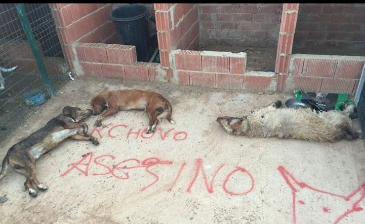 Matan en León a tres perros del último lanceador del Toro de la Vega