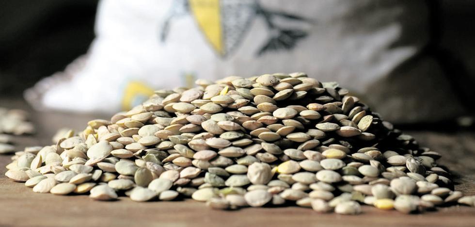 La cosecha de la lenteja se reduce a menos de la mitad por culpa de la sequía