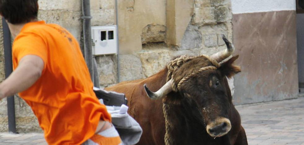 Los defensores de los animales tratan de impedir el toro enmaromado de Astudillo