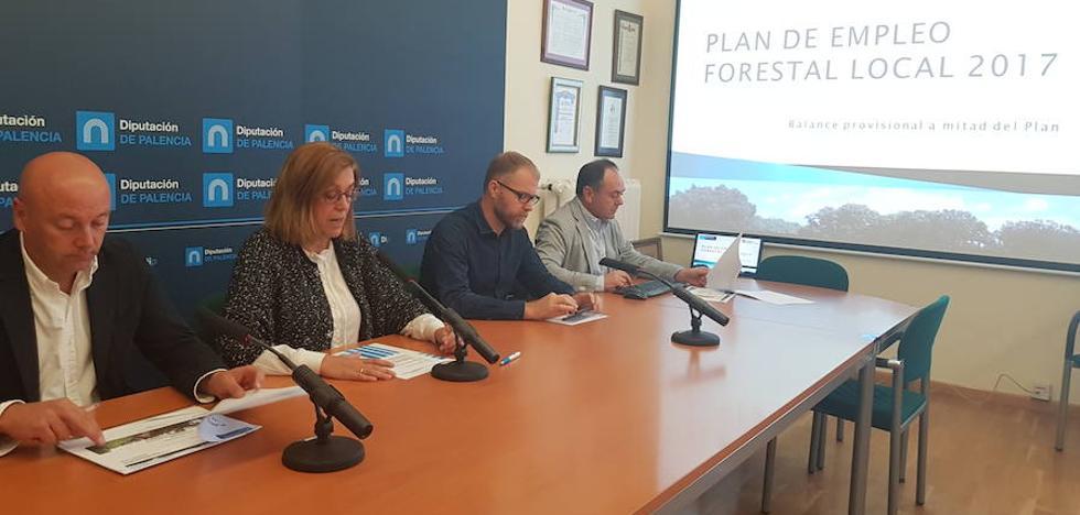 Satisfacción en Palencia con el II Plan de Empleo Forestal