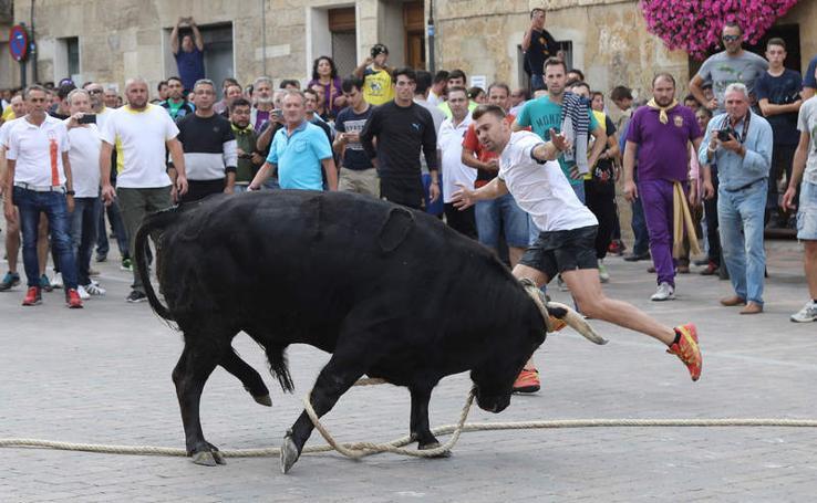 Astudillo disfruta un año más de su toro enmaromado