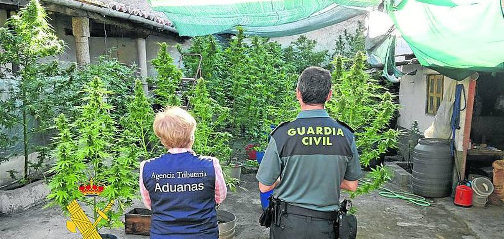 La Guardia Civil halla y desarticula una plantación de marihuana