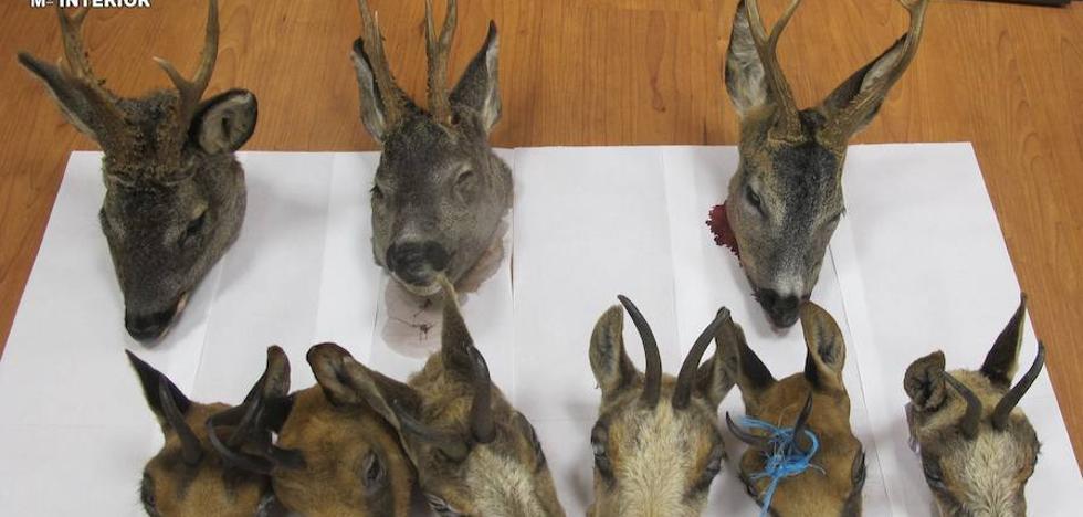 El Seprona identifica a dos varones como presuntos cazadores ilegales de nueve piezas en Babia y Luna