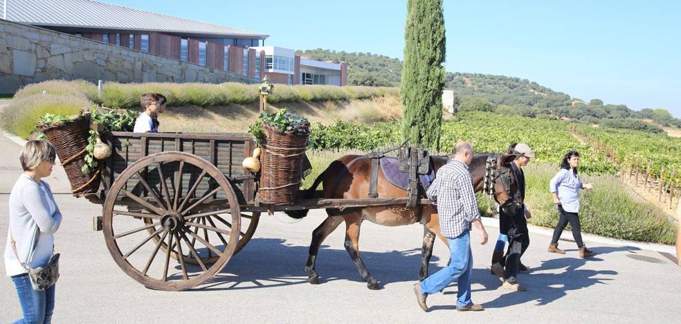 Valbusenda celebra la Fiesta Tradicional de la Vendimia del Mundo en su jardín ampelográfico