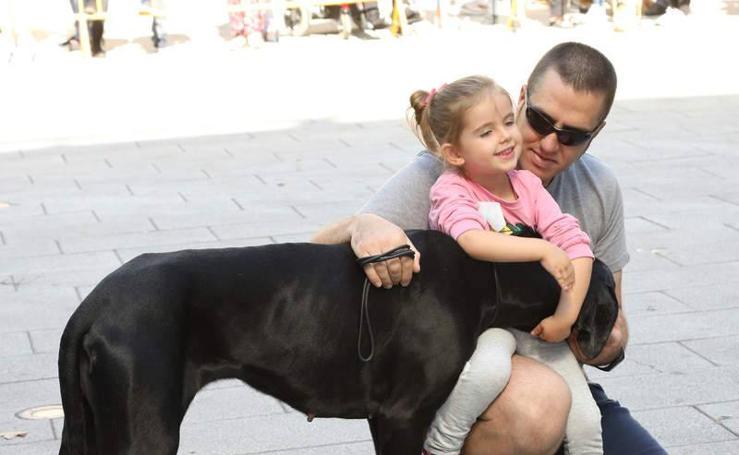 Feria de la adopción en Palencia