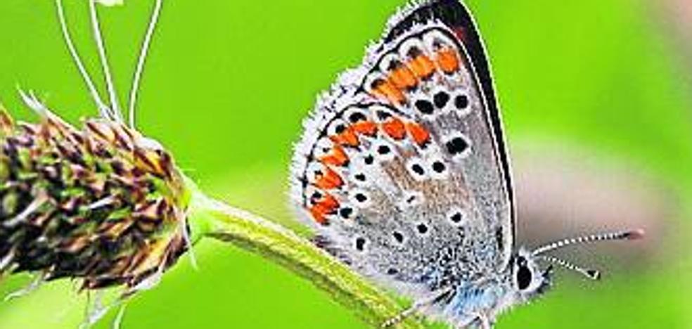 Dos estudios cifran en 1.015 especies de mariposas en Palencia
