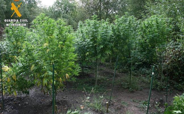 Detenido en Barruelo con 90 kilos de marihuana