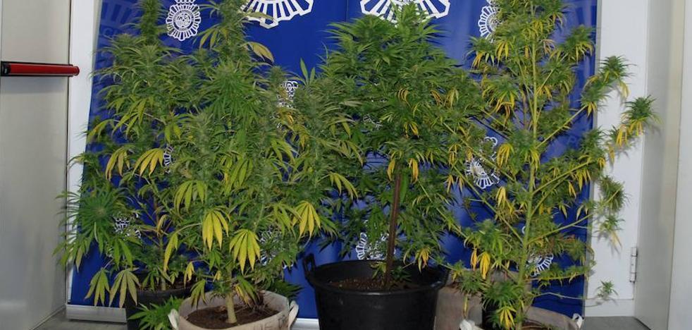 Detienen a un vecino de Segovia con 7 plantas de marihuana en la terraza