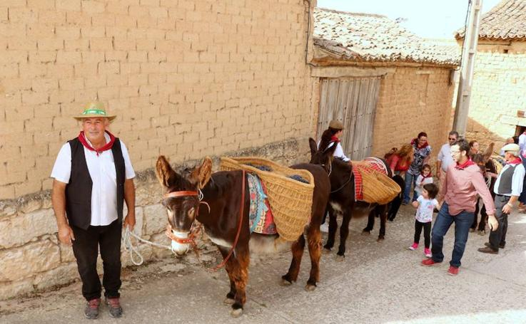 XX Fiesta de la Vendimia del Arlanza en Valdecañas de Cerrato (3/3)