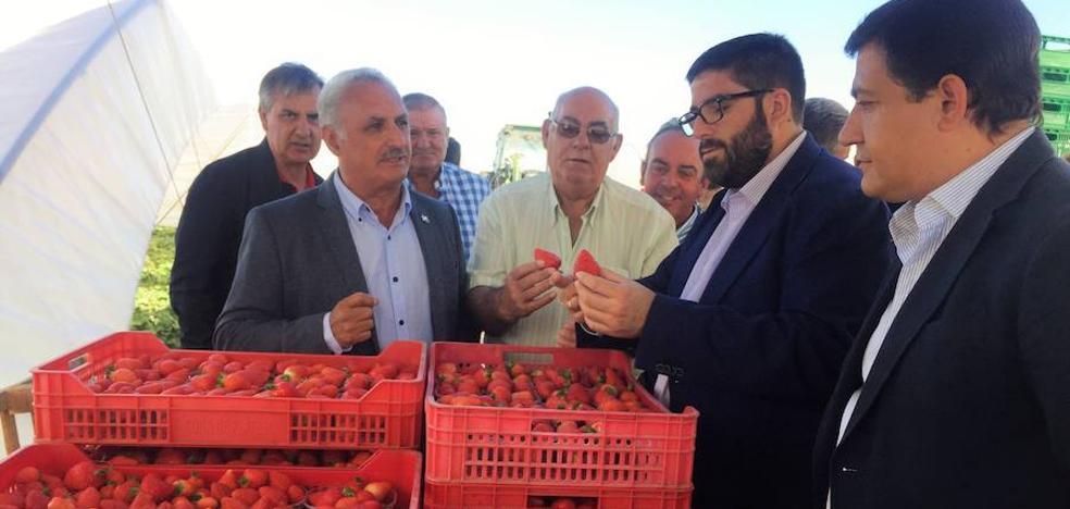Las cooperativas freseras se afianzan en Ávila