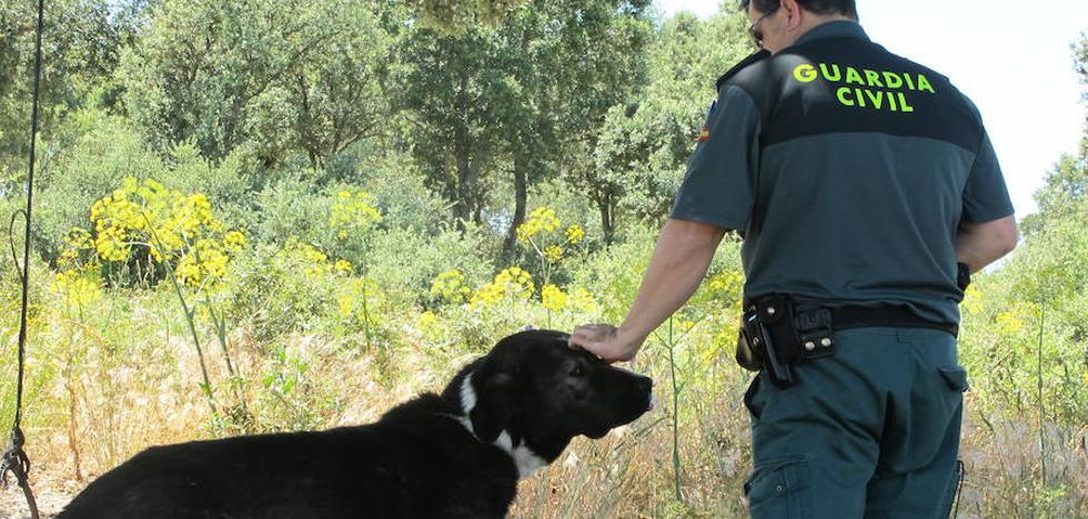Condenado un vecino de Turégano por ahorcar a su perro