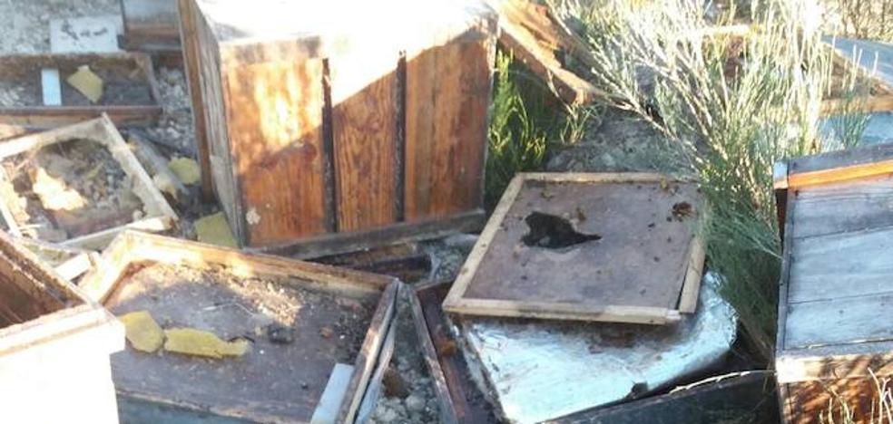 Más de cien ataques de oso a colmenares en Palencia