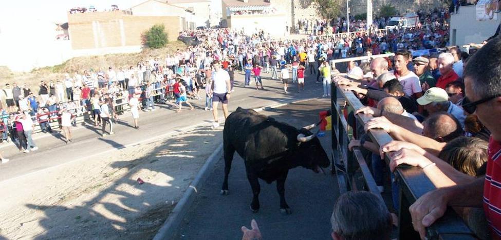Los encierros de Olmedo clausuran la temporada en la provincia