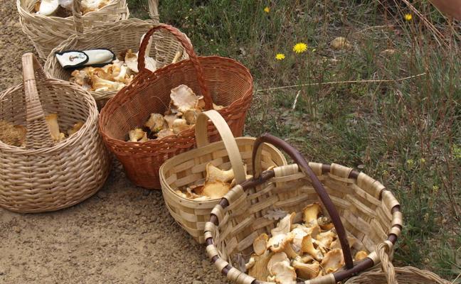 La sequía retrasa la temporada de setas, pero los expertos auguran un año normal en Palencia