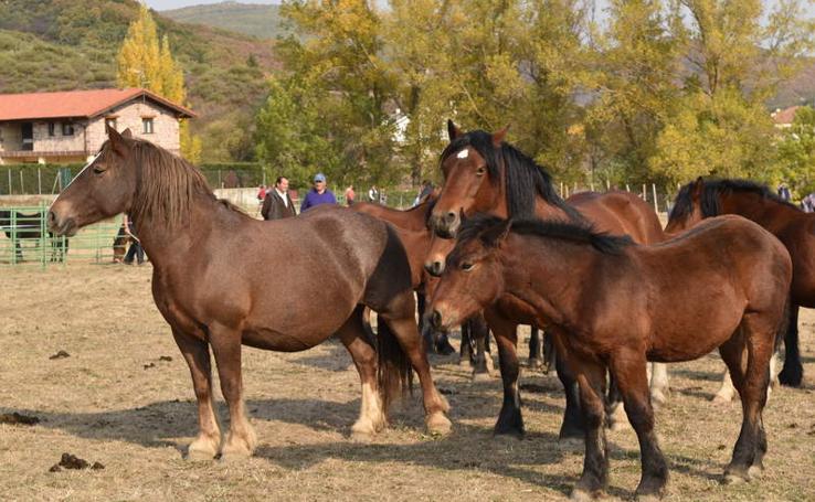 Feria del caballo de La Pernía