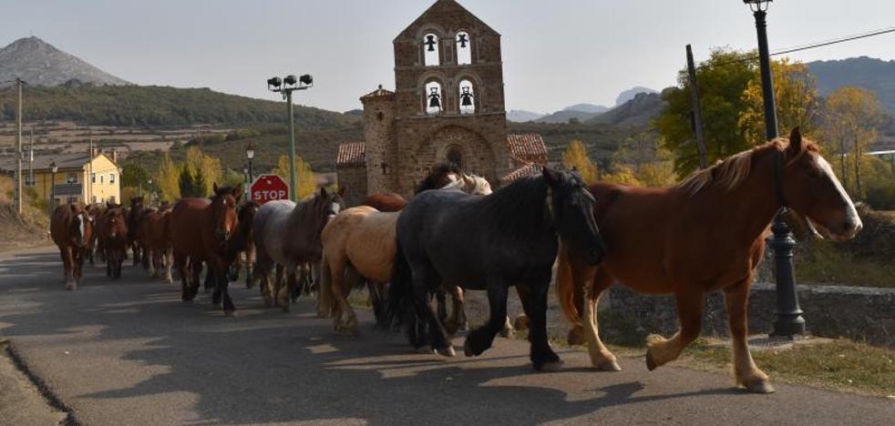 Cinco ganaderías presentan 200 caballos en la feria de La Pernía