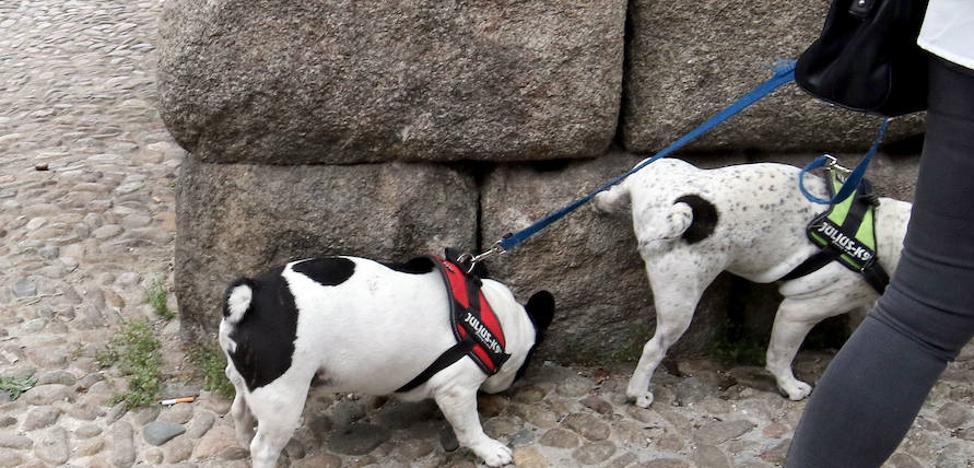 Multas por trepar por las piedras del Acueducto o introducir colillas en los huecos