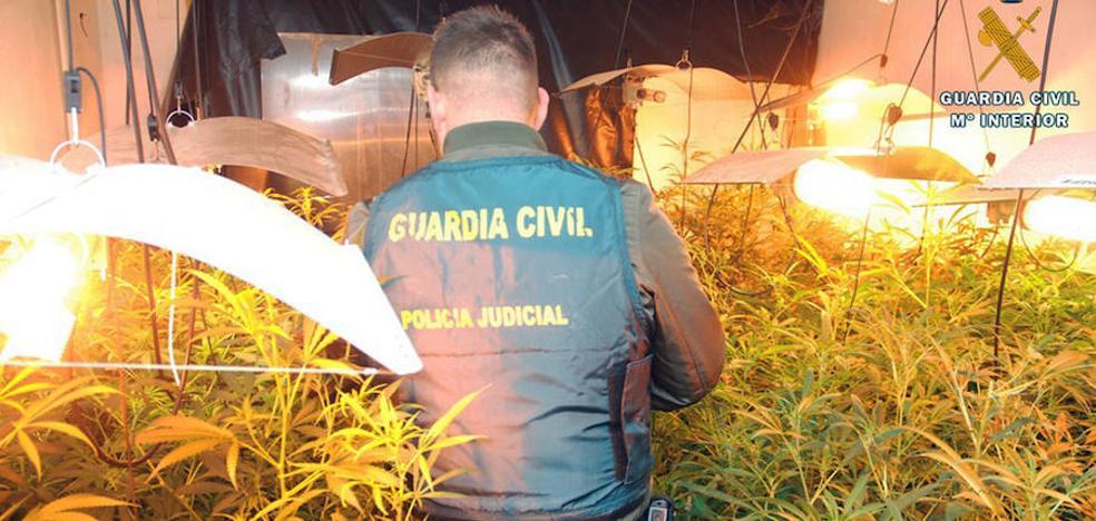 Detenido un segoviano de 65 años con un laboratorio con 202 plantas de marihuana