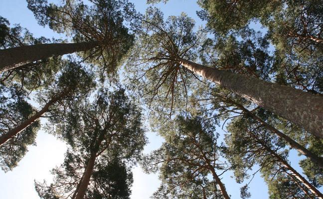 Los Montes de Valsaín serán un laboratorio sobre el cambio climático
